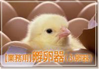 業務用孵卵器(ふ卵器)